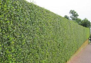 hedge-cutting-maintenance-bermondsey
