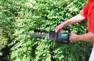 hedge-trimming-bermondsey